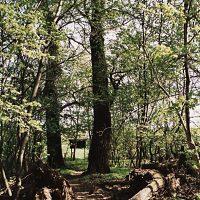 Lužní les u Mikulčic